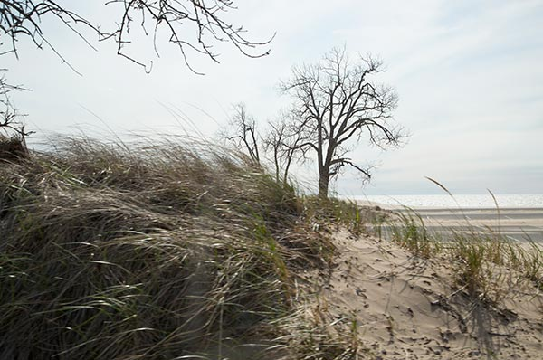 Muskegon State Park dune grass